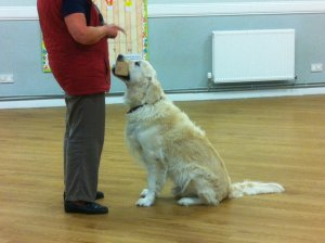 Easy Steps Dog Training